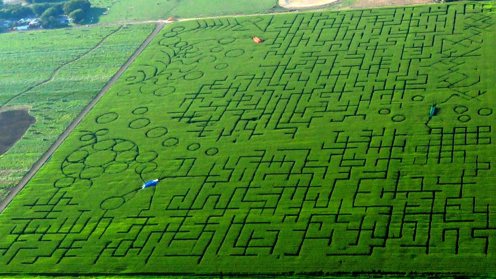 The 60-acre Cool Patch Pumpkins corn maze in Dixon, CA, is so big that people routinely call 911 for help getting out, even though they have a map that details every twist and turn.