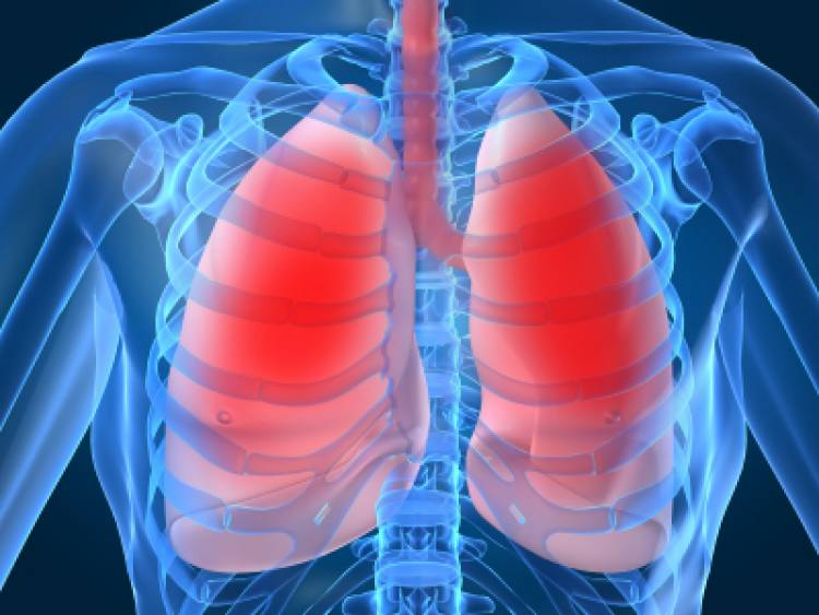 Your left lung is smaller than your right lung to make room for your ...