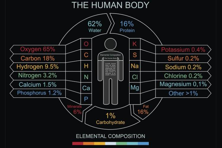 Almost 99% of the mass of the human body is made up of six elements: oxygen, carbon, hydrogen, nitrogen, calcium, and phosphorus. Only about 0.85% is composed of another five elements: potassium, sulfur, sodium, chlorine, and magnesium.