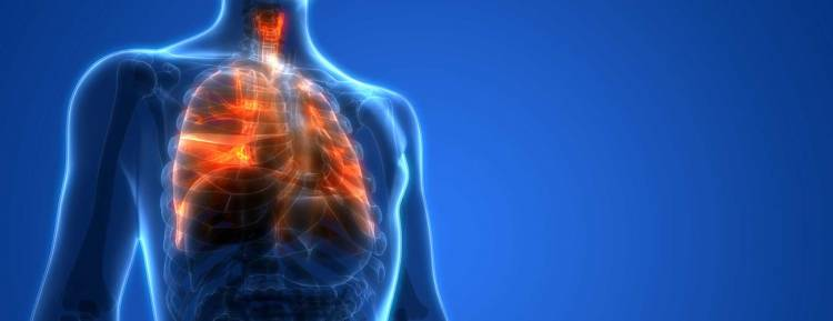 Your left lung is smaller than your right lung to make room for your heart.