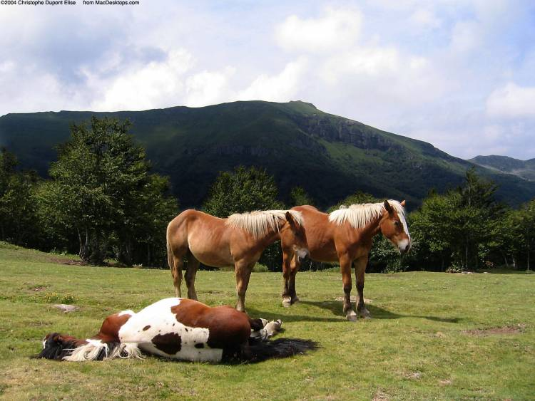 Horses and cows can sleep standing up, but they don't experience full REM sleep  unless they lie down.