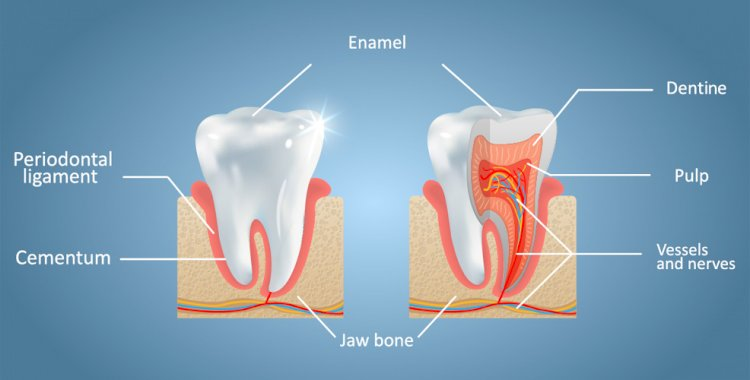 The hardest substance in the human body is Enamel.