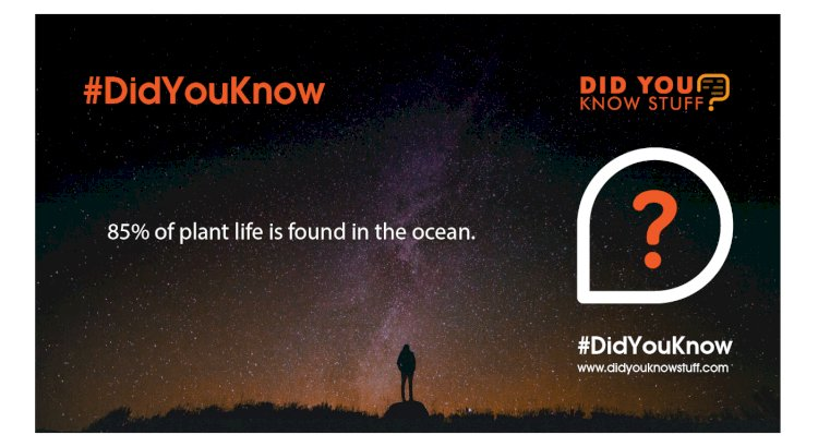 85% of plant life is found in the ocean.