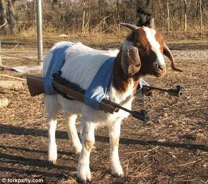 In 2009, Nigerian Police detained a goat on suspicion of attempted armed robbery.