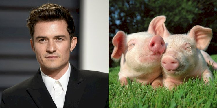 Orlando Bloom has swinophobia, which is a fear of pigs!