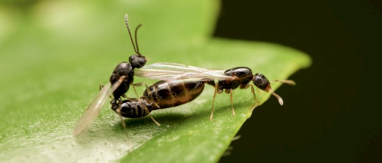 Ant Queens can live up to 30 years long.