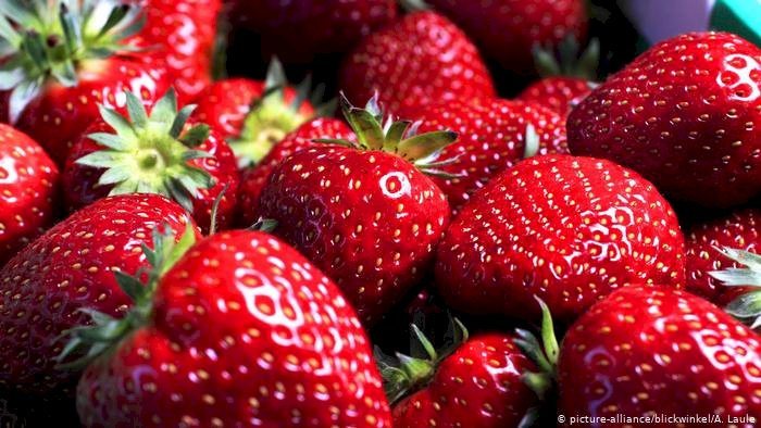 On the average, there are 200 tiny seeds on every strawberry.