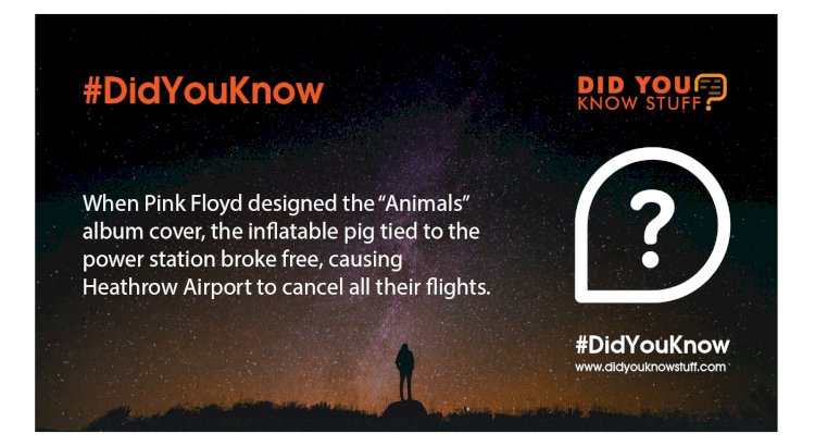 """When Pink Floyd designed the """"Animals"""" album cover, the inflatable pig tied to the power station broke free, causing Heathrow Airport to cancel all their flights."""