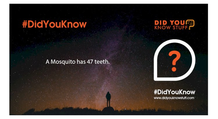 A Mosquito has 47 teeth.