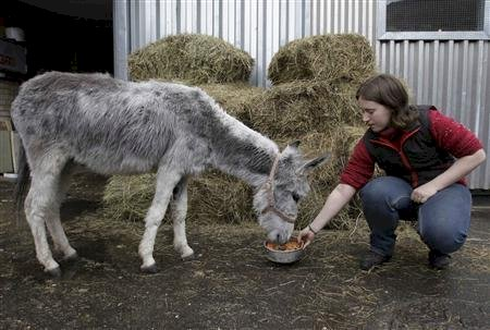 A donkey named Monika retired from the Mariinsky ballet in St Petersburg, Russia, in 2008 after 19 years in the ballet Don Quixote.